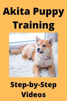 How To Teach A Puppy Their… #dogtraining