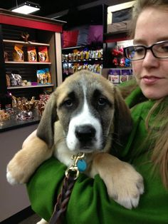 Burton was another sweet visitor to our Global Pet Foods store in Edmonton (Jasper Avenue & 117 St. NW).  Look at those sad eyes!!