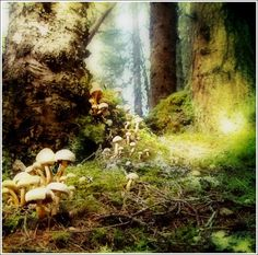 Browse all of the Mushrooms photos, GIFs and videos. Find just what you're looking for on Photobucket