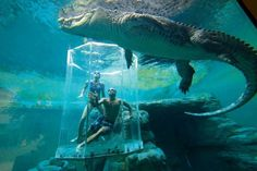 Amazing Places you Should Visit in Your Life, Part 1 - Crocosaurus Cove Aquarium, Australia