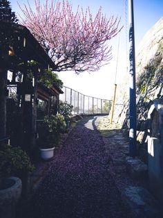 Kuroinu's Photo  2015年03月19日  17.梅  広島県