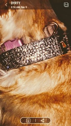No glues or dies lightweight airy and durable classy inviting yet sophisticated goes great on any dog big small medium just direct message me @xoxooeacebypiecexoxo to order or call 607-677-4147 Designer Dog Collars, Big And Small, Bling, Classy, Medium, Dogs, Jewel, Chic, Pet Dogs