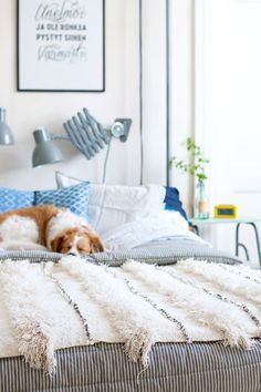 The BEST accessory in the world in a soft comfy bed; a dog! idea pic from Parolan Asema