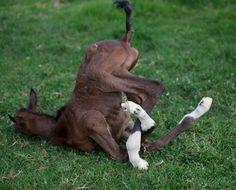 Me fall?: Baybeee's got pretzel legs!