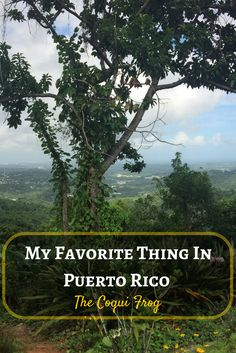 Have you every fallen in love with a new animal while traveling? The Coqui Frog turned out to be one of my favorite things in Puerto Rico. Fajardo, Travel Blog, Travel Tips, Puerto Rico, Puerto Rican Culture, Diving Course, Romantic Escapes, Beautiful Places To Visit, Central America