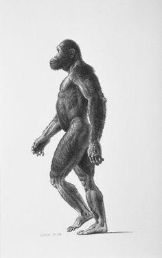 Australopithecus africanus - reconstruction by John Gurche