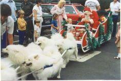 Samoyed Christmas