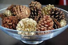 types of pine cones - Google Search