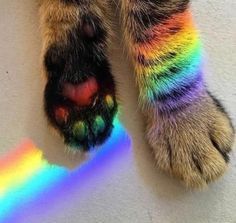 Rainbow cat and other cats Kittens Cutest, Cats And Kittens, Cute Cats, Funny Cats, Cats Bus, Pretty Cats, It's Funny, Beautiful Cats, Cute Baby Animals