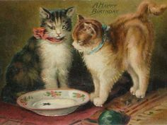 Antique Embossed German Tuck & Sons Postcard with Two Cats