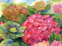 Pink Hydrangea Painting by Doris Joa - Pink Hydrangea Fine Art Prints and Posters for Sale
