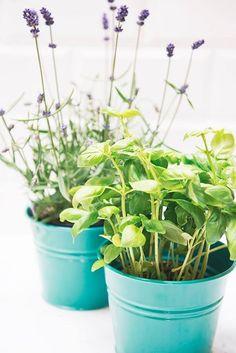 lavendel of basilicum op het aanrecht en je hebt geen last van fruitvliegjes Kitchen Herbs, Body Care, Organize, Life Hacks, Lavender, Household, Spices, Cleaning, Food