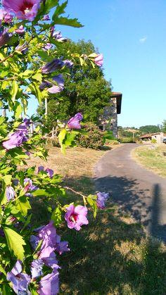 #verano en #Asturias www.fincaelpalacio.com
