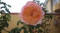 No meu jardim...