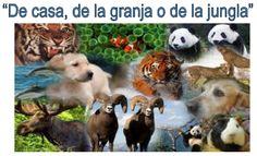 Proyecto destacado elaborado por el equipo E5 Primates, World Photo, Fauna, Goats, Labrador Retriever, Cow, Change Org, Wild Animals, Homework