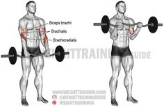 Exercise: EZ bar reverse curl. Type: Isolation pull. Target muscle: Brachioradialis. Synergists: Biceps Brachii and Brachialis.
