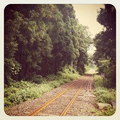秋田杉の林に消えて行く線路 Photo by ishi_zerodate • Instagram