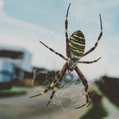 #lackoj #spider #net #outdoor #soblahov #slovakia