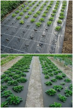 Neat and ergonomic beds that you want to build .- Neat and ergonomic beds that you want to build on your site / I am the superfood - Vegetable Garden Planner, Small Vegetable Gardens, Veg Garden, Vegetable Garden Design, Fruit Garden, Garden Beds, Hydroponic Gardening, Organic Gardening, Flower Gardening