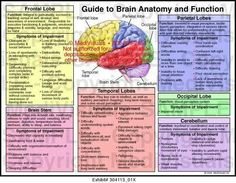 Frontal temporal parietal and occipital lobes cerebellum and brain stem with list of function and symptoms of impairment Description from I searched for this on images Brain Anatomy And Function, Human Brain Anatomy, Human Anatomy And Physiology, Brain Lobes And Functions, Function Of Brain Parts, Brain Stem, Brain Science, Medical Science, Mapeamento Cerebral