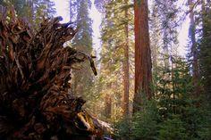 California, USA 2013