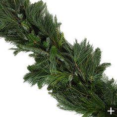 Fresh Mixed Fraser Pine Holiday Garland