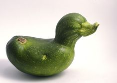 Can you believe this beautiful zucchini was constantly teased in high school? | 20 Ugly Vegetables That Grew Up To BeSwans