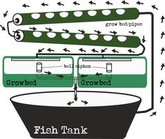 Aquaponics gravity nfp and grow beds. Pvc pipes for lettuce.