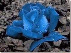 flores-flowers-flor-fleurs-428
