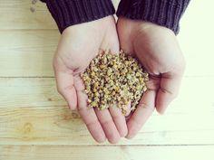 Greek Chamomile - Dried Flowers -Herbal Tea
