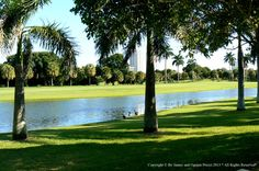 Miami Beach Golf Course Homes information about buying and selling homes located on Miami Beach Golf Courses.
