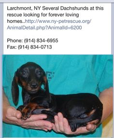 From: I love dachshunds