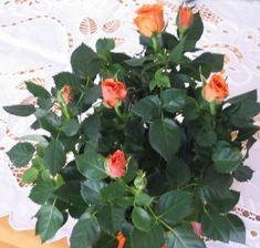 Indoor Plants, Presents, Garden, Paper, Inside Plants, Gifts, Garten, Lawn And Garden, Gardens