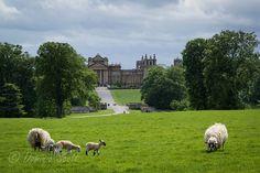 Blenheim Palace - England | Flickr - Photo Sharing! Dominic Scott Photography