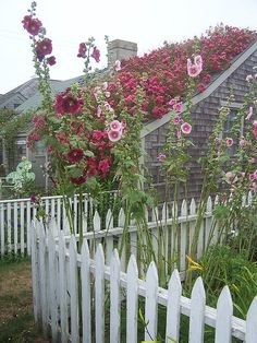 I love Hollyhocks, as I kid I used to make dolls out of them.  A blossom for the skirt, a pin through a bud for the head