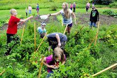 Norridgewock school garden a learning, helping project   The Kennebec Journal, Augusta, ME