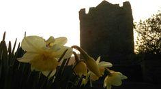 Strangford castle.
