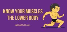 Know Your Muscles-- The Lower Body - http://malehealthclub.com/know-your-muscles-the-lower-body/