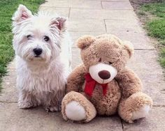 Max and Teddy.... from a FB account ~ re-pinned by doggiechecks.com