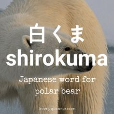 shirokuma - polar bear in Japanese - Japanese winter words Japanese Phrases, Japanese Names, Japanese Words, Japanese Animals, Languages Online, Foreign Languages, Japanese Language Learning, Learning Japanese, Winter In Japan