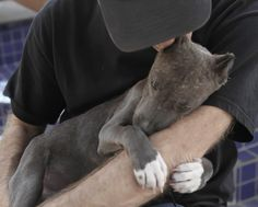 Pit Bull puppy rescued by ICARE Dog Rescue <3 make a difference - rescue your pets <3