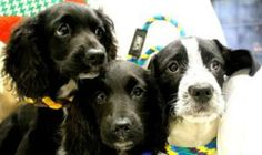 More than 40 of the dogs have been adopted. Some are still under medical care.