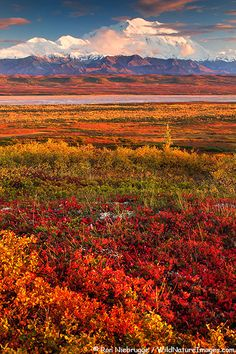 Denali National Park. this would be the roadtrip of all road trips.