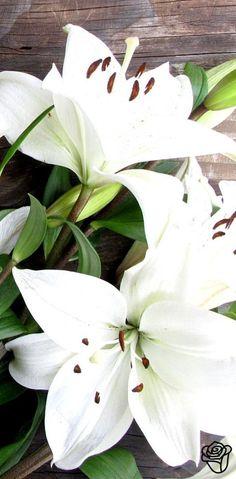 white lilies ♥