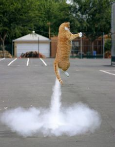 25 Perfectly Timed Cat Photos--  Most rocket-propelled cats can pull this one off for you if you ask them nicely.