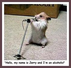 This is too funny! Looks like our hamster! Funny Rats, Funny Mouse, Funny Hamsters, Cute Funny Animals, Animal Captions, Funny Animal Photos, Funny Photos, Silly Pics, Funny Happy Birthday Pictures