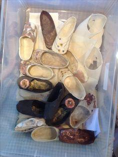 Ballet Shoes, Dance Shoes, Bees, Cowboy Boots, Planets, Textiles, Sculpture, Artwork, Nature