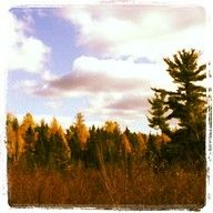 There's so much beauty to explore in #Wisconsin. (Especially #Vilas County)!