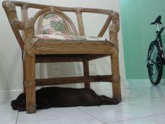 Athena, aproveitando enquanto ainda cabe embaixo da cadeira