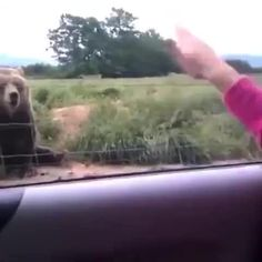 Bear and girl wave to each other! - 9GAG